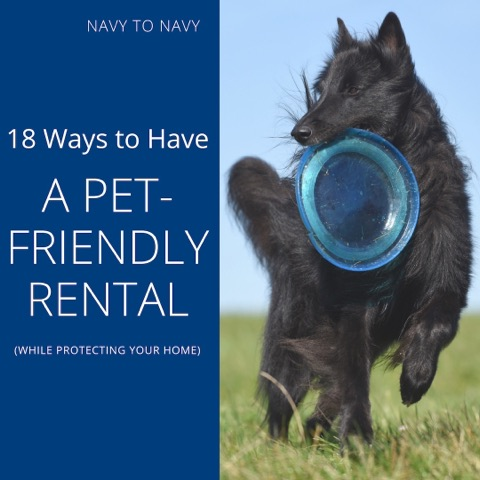 18 Ways To Have A Pet Friendly Rental While Protecting Your Home